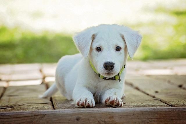 Objets tendances et cadeaux originaux pour votre chien Universal Dog